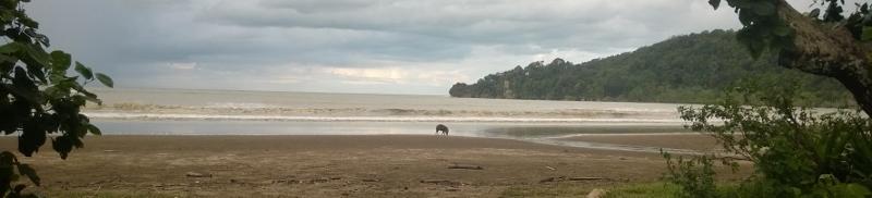 Kiaulė ir jūra